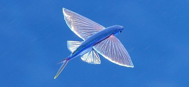 Needlefishes
