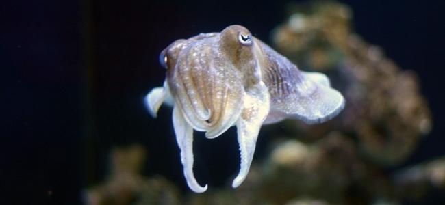 Cephalopods
